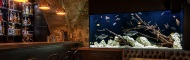 Luxury aquariums